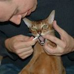 man brushing cat's teeth