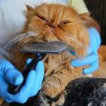 cat being combed under chin