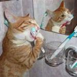 cat brushing teeth in front of mirror