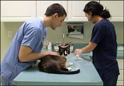 vet and owner looking at cat