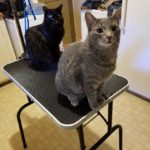 two cats on small table