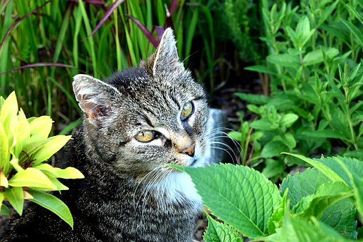 Grey cat in midst of greenery