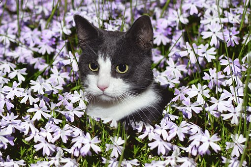 Black & white cat head in midst of flowers
