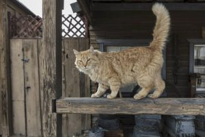 Orange cat, tail up, on railing
