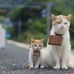 white & orange cat & kitten with miniature suitcases tied around their necks