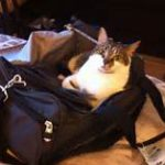 cat lying on top of black carrier