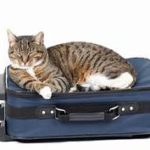 tabby cat lying on top of blue suitcase
