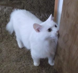 White kitty standing, looking up