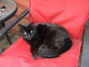 Black cat lying on red chair