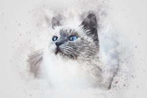 Drawing of white & grey cat