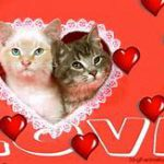 "Heads of two cats in white lace heart, red background with word ""love"""