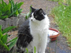 black and white cat, sitting