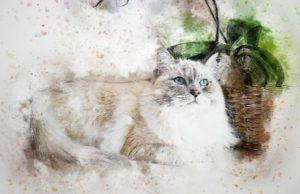 drawing of white cat lying down