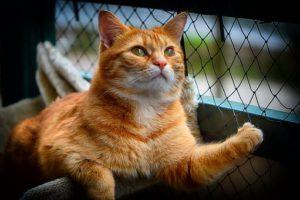 Orange cat, sitting, looking up