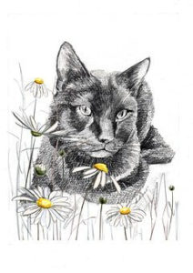 sketch of black cat and daisies
