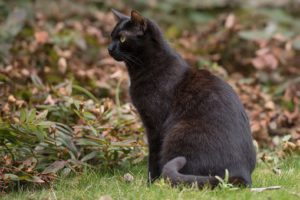 Black cat seated outside
