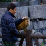 Man petting orange cat on fence