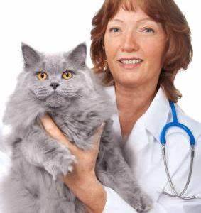 Woman vet holding cat