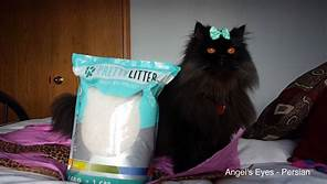 black cat, blue bow, next to PrettyLitter