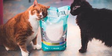Two cats loving PrettyLitter