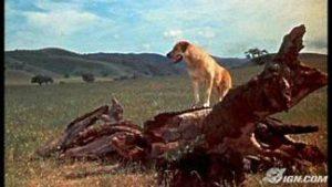 Yellow dog standing on log
