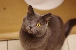 Grey cat standing, only 1 eye