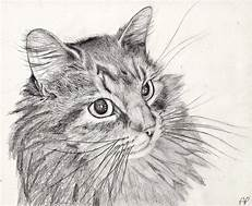 Drawing of long-haired cat head