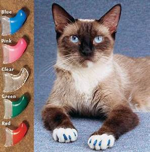 Siamese cat; caps for claws