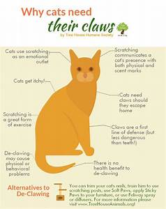 Chart with info about declawing