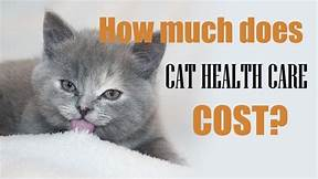 Pic of cat and sign about health care
