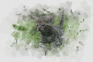 sketch of grey kitten in grass