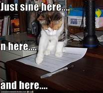 Cat standing on application form