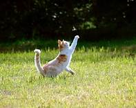 calico cat reaching for butterfly