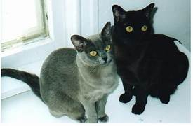 Grey cat, black cat seated together