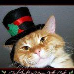 Head of orange cat; top hat
