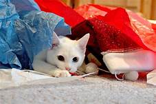 White cat playing with several items