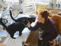 2 cats on desk; woman petting