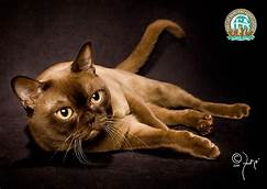 Brown cat, lying on side