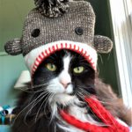 black & white cat in grey tassled hat