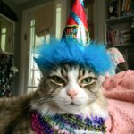 tabby cat with blue party hat