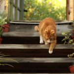 Orange cat walking down porch steps