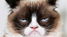 close-up of grumpy cat's face