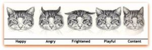 cats' eyes showing meaning