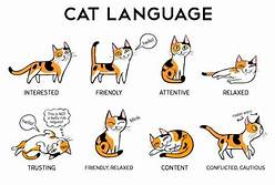 chart of cat body language