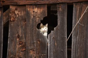cat looking through hole in old building
