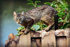 Tabby cat on fence