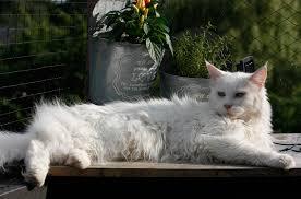 white cat lying on bench