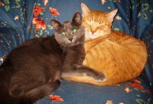 Grey cat; orange cat sleeping together