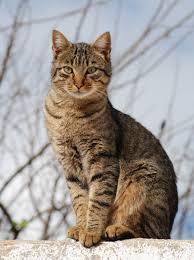 tabby cat, sitting