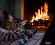 cat sleeping by fire